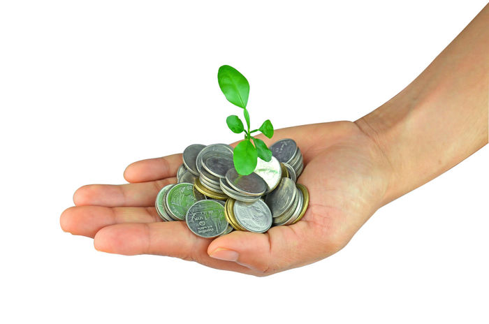 Place a coin in the hand and planted a tree on the coin. Business Currency Economy Growth Interesting Loan  Plant Tree Branch Cash Coin Concept Conservation Earnings Ecology Finance Financial Hand Idea Investment Leaf Money Reforestation Seedling Sprout
