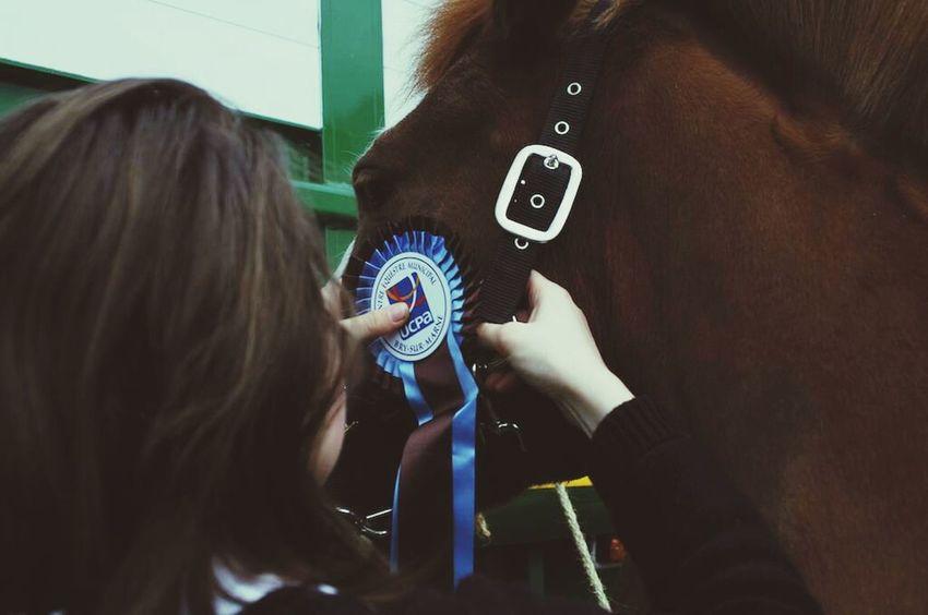 Horse Horse Jumping Won