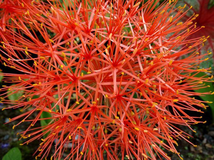Meu Jardim Flowers EyeEm Best Shots - Flowers Flower Of The Day