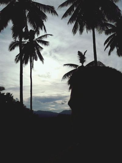 Walking Around Sunset Silhouette ❤❤❤
