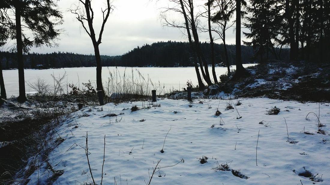 Still winter Snow ❄ Winterwonderland