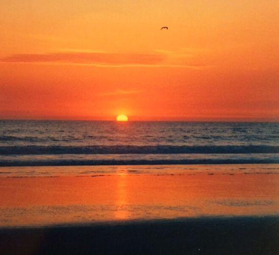 New Beginnings. My first sunset as I began a new journey. Sunset Sun Newjourney Journey Beachphotography Beach Nofilter California Newbeginning 35mm 35mm Camera 35mmfilmphotography Coastline Coastal Ocean Ocean View Orange Color