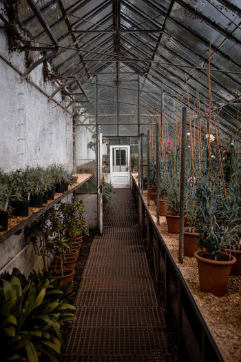 View of potted plants in greenhouse