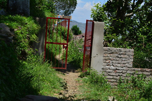 Day Gate In Nature Nature No People Outdoors Plant Railing Red Gate Tree