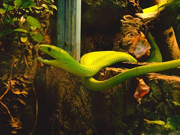 Green Green Green!  Snake Taking Photos Zoo Animals  Terrarium München Zoo Enjoying Life