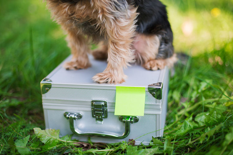 Close-up of dog sitting over box on field