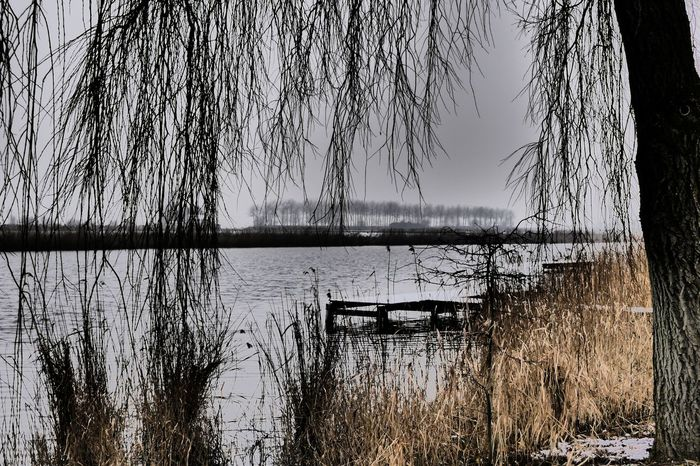 My New Camera  Water Tree Nature Lake Bare Tree Outdoors Beauty In Nature No People Tranquility Sky Grass Day 3XSPUnity 3XSPhotographyUnity Silent Taking A Walk Plant Growth Scenics Branch