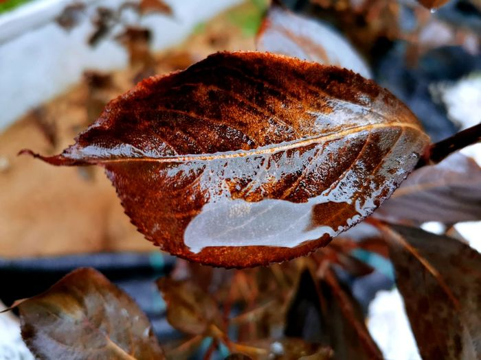 Close-up of dry leaf on plant during winter