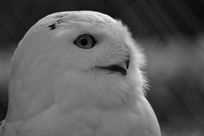 #nikon Nikon D3200 Bird Portrait Pets Cockatoo Eye Close-up Animal Body Part Owl HEAD Animal Eye Mug Shot