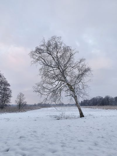 Bare tree on snow covered land against sky