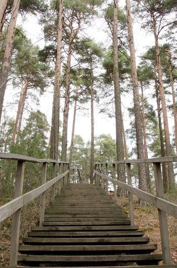 The way up Abandoned Absence Autumn Composition Conifers Diminishing Perspective Fence Finland Footbridge Footpath Forest Leading Long Narrow No People Outdoors Perspective Pinetrees Scandinavia The Way Forward Tree Tree Trunk Walkway Wood WoodLand