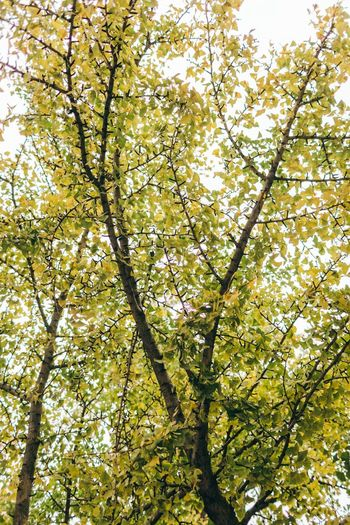 Tree Branch Low Angle View Nature Beauty In Nature Growth Springtime Green Color Backgrounds Day Freshness Full Frame Outdoors Flower No People Leaf Fragility Sky Close-up Neighborhood Map