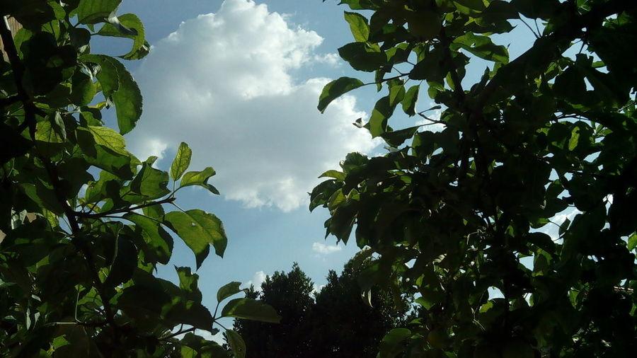 A Piece Of Sky