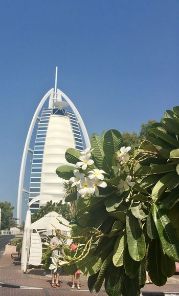 Dubai Flowering Plant Dubai Burj Al Arab Iconic Buildings Architecture Sky Built Structure Clear Sky Plant Building Exterior Nature