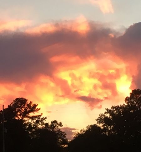 Sky On Fire Sunset Sky Cloud - Sky Tree Beauty In Nature Silhouette Orange Color Sunset Sky Cloud - Sky Tree Beauty In Nature Silhouette Orange Color Scenics - Nature Tranquility Tranquil Scene Nature No People Idyllic Outdoors Dramatic Sky Sunlight Romantic Sky
