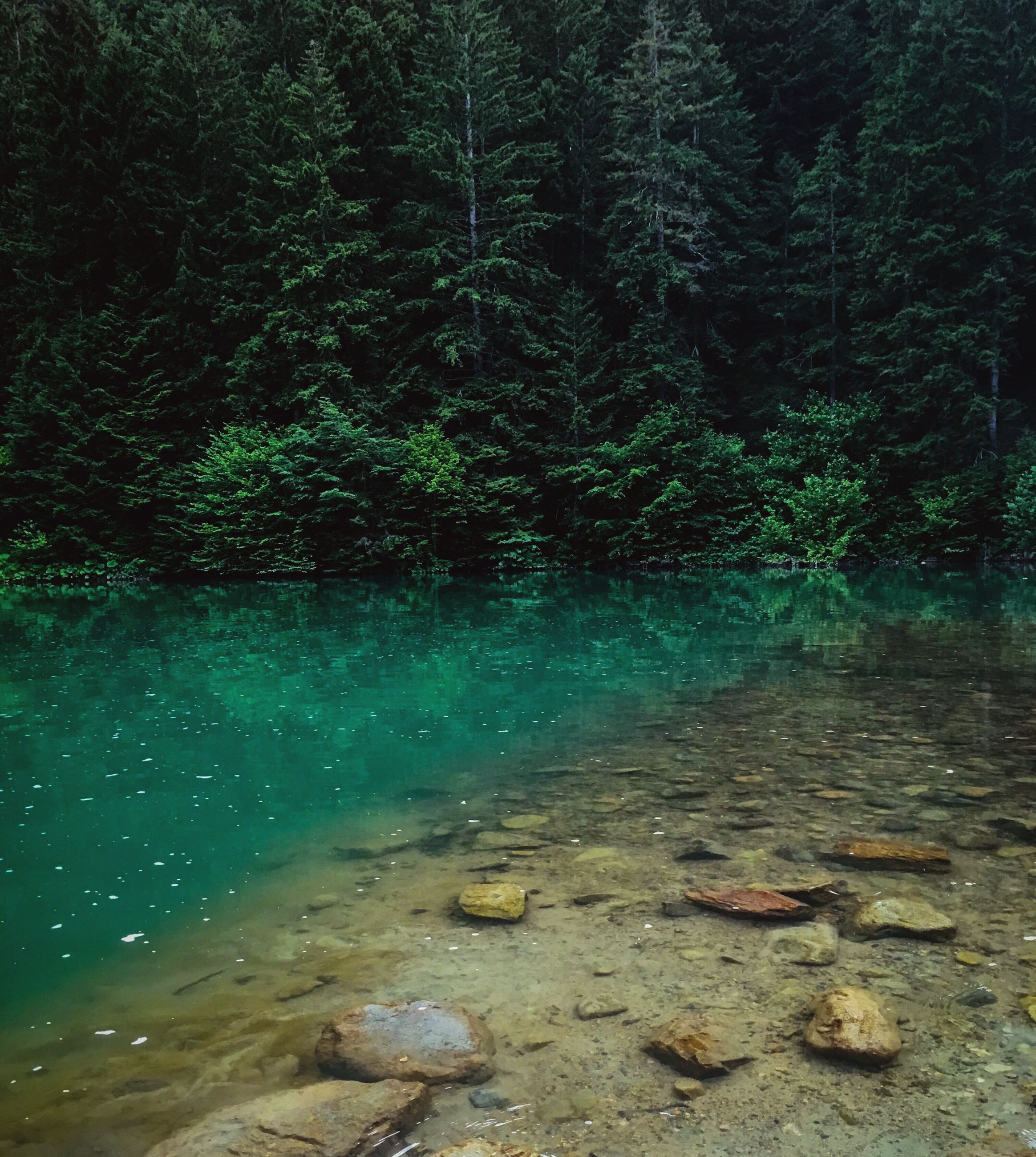 water, nature, tree, forest, no people, tranquility, outdoors, beauty in nature, day