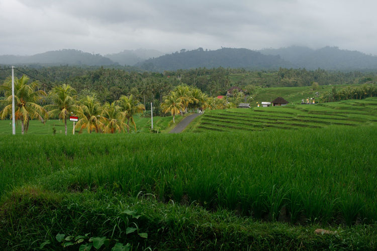 Countryside in