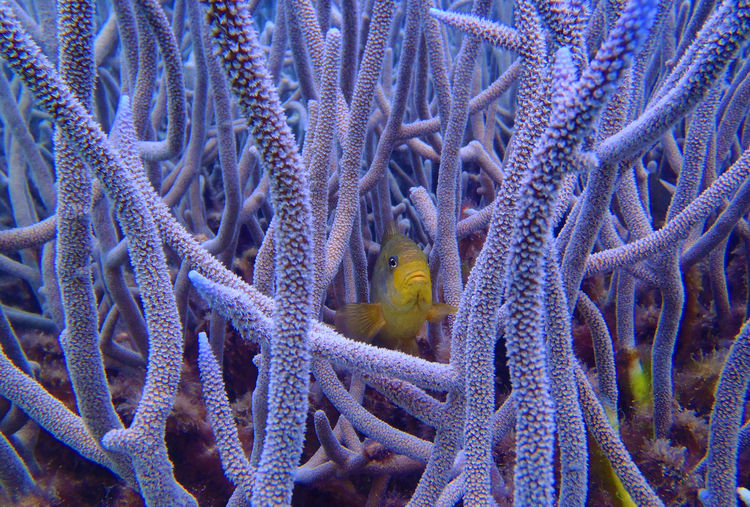 Yellow fish swimming amidst coral