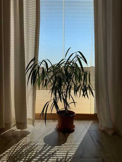 Potted plant on floor against window at home