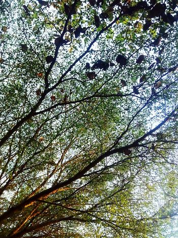 Tree Photography Tree_collection  Nature Photography Nature Collection Nature Color Tree Colors Color Of Nature Color Of Tree Beauty Of Nature Beauty Of Tree Tree View Nature Tree