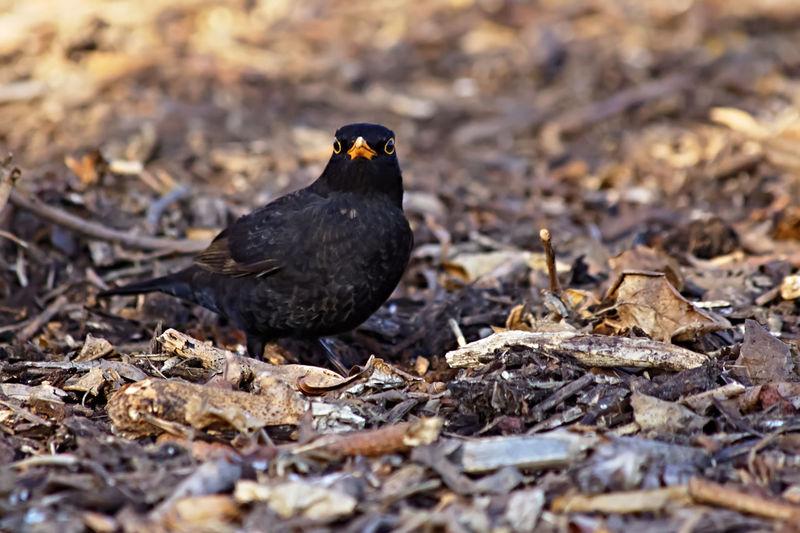 A black bird on