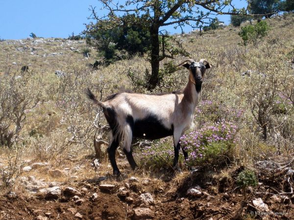 Animal Themes Mammal One Animal Tree Nature Field Domestic Animals Livestock No People Outdoors Day Full Length Grass Llama