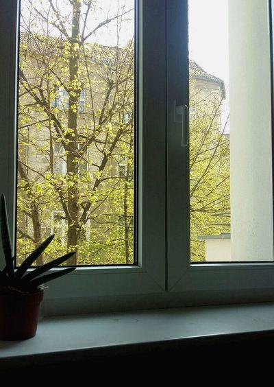 Finestra Luogo Tree Window Sunlight Window Sill Close-up