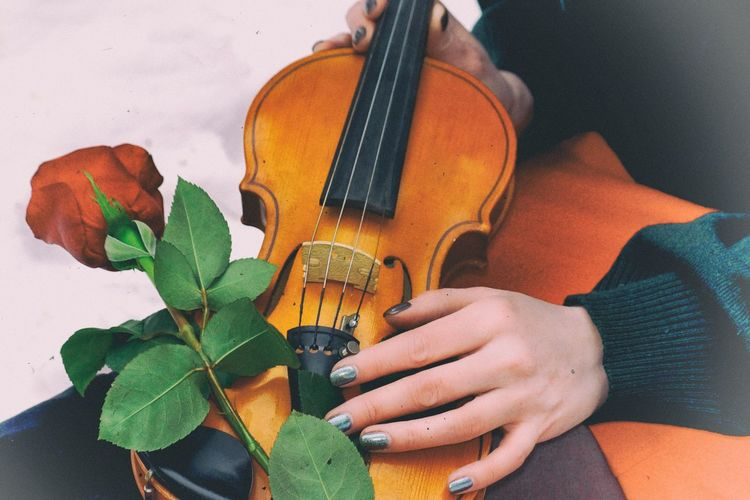 Close-up of woman holding violin with red rose