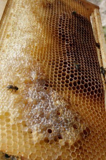Biene 🐝 Bienen  Bienen Bei Der Arbeit Honeycomb Honeycombs Honigbiene Beehive Bienenwabe Honey Honey Bee