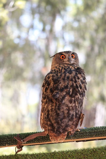 Owl portrait No Filters Or Effects No Filter, No Edit, Just Photography Owl Art Animal Themes Animal Wildlife Animals In The Wild Bird Bird Of Prey Cazorla Cazorla Jaen Close-up Nature No People One Animal Outdoors Owl Owls Owls💕