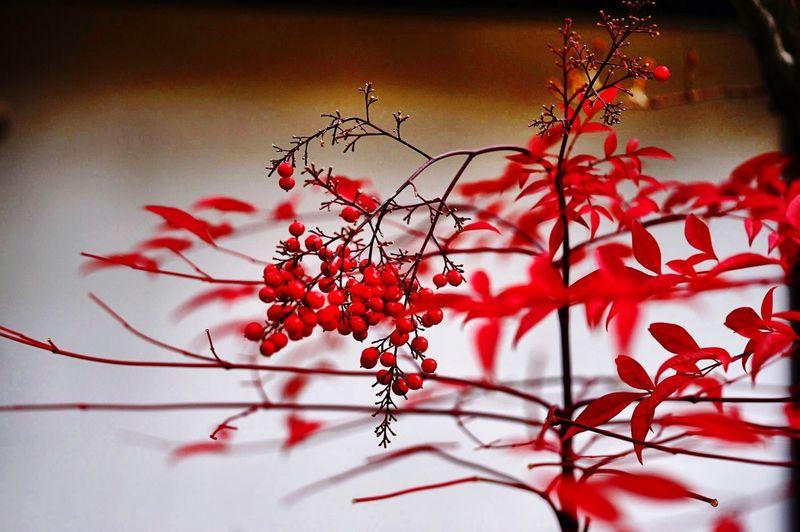 倉敷 美観地区 和 おはようございます♪