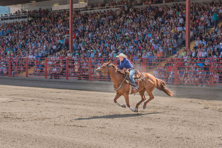 Williams Lake, British Columbia/Canada - July 2, 2016: a barrel racing competitor urges her horse to the second barrel at the 90th Williams Lake Stampede. 90th Williams Lake Stampede Arena Canadian Professional Rodeo Association Determination Horse And Rider Rodeo Woman Action Airborne Audience Barrel Racing Competition Cowgirl Editorial  Fast Female Galloping Horse Horse Race Outdoors People Professional Rodeo Speed Stampede Stands