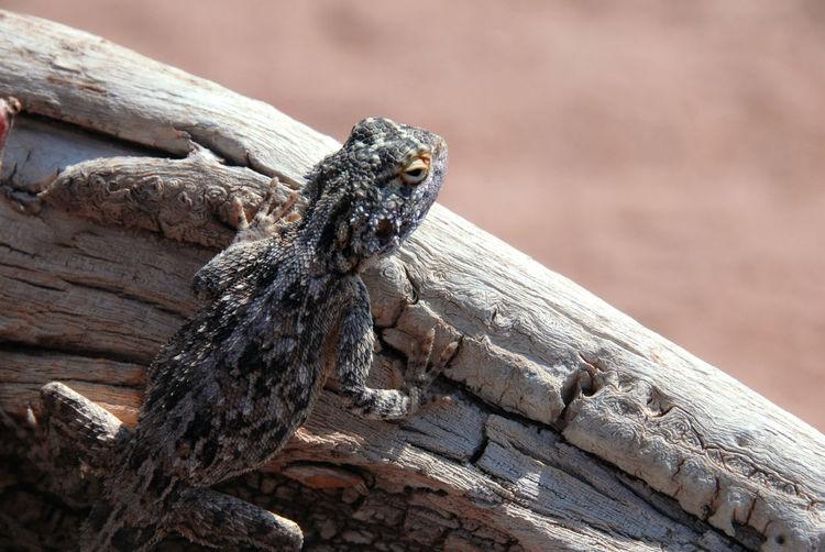 Close-up of lizard on log