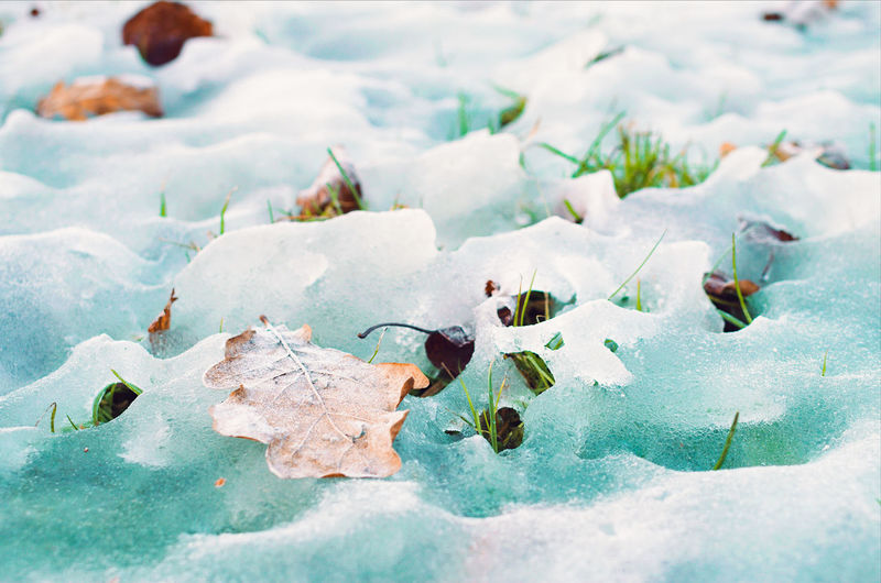 Grass peeking out of melting snow on a sunny day. Beauty In Nature Blue Chilly Closeup Cold Temperature Daytime Freshness Grass Green Growth Ice Leaf Macro Meltdown Melting Snow Nature No People Outdoors Snow Spring Sunny Turquoise White Winter