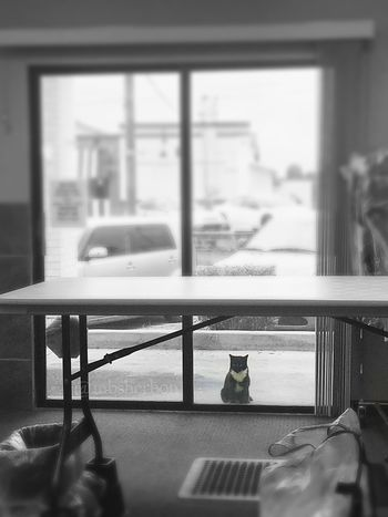 Eye4photography  Everyday Beauty EyeEm Nature Lover Finding Beauty Blackandwhite Cat Animal_collection Cats Of EyeEm Moments Black And White Our local laundromat also cares for a feral community, and this little guy was patiently waiting on dinner. ❤️