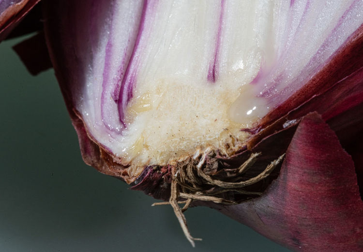 Useless Onion Onion Onions Vegetables Directly Above Vegetable Waste Beauty In Decay Close-up Flowering Plant Freshness Plant Vulnerability  Fragility Beauty In Nature No People Nature Pink Color Growth Indoors  Food Purple Macro Juice