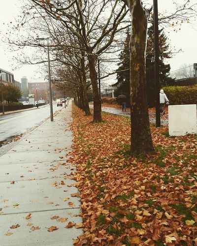 Winter is coming 🐺 Boston Bostonweather Fall Autumn Leaves Winteriscoming Rain RainyDay Trees JamaicaPlain WalkHome MyDay Instapretty Igboston VSCO Vscocam