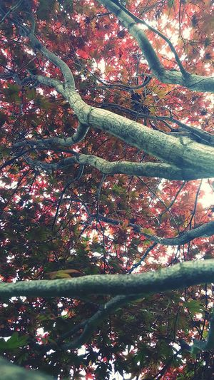 Tree Colorful Pretty Nature Branches Another Rainy Day Life