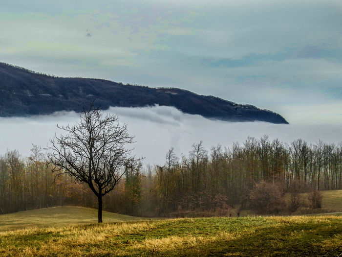 Fogin Emilia Romagna Cloud Landscape_Collection Sunlight Bare Tree Beauty In Nature Close-up Day Field Fog Grass Horizon Horizon Over Land Landscape Landscape_photography Mountain Mountains Nature No People Non-urban Scene Outdoors Scenics Sky Tranquil Scene Tranquility Tree