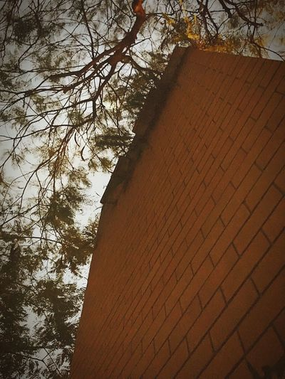 3 storey brick fence in backyard, from the bottom looking up Dramatic Angles Tree Built Structure Bricks Brick Wall Low Angle View Branches Branches And Sky Building Exterior Outdoors Nature On Your Doorstep Exploring Nature To The Top