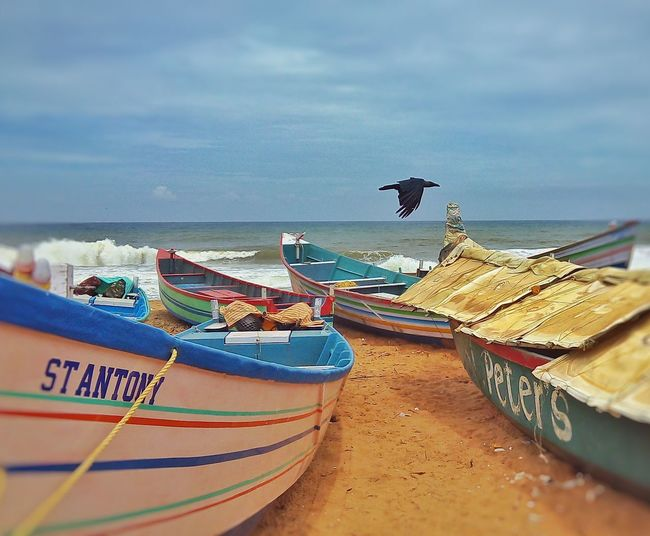 Beach crow landing .to shore of the silent boats. Sea Atmosphere Birds Life Brighter Day Silent Sea Seascape Kerala Beach Special Visuals Crows Flying Beach Side.