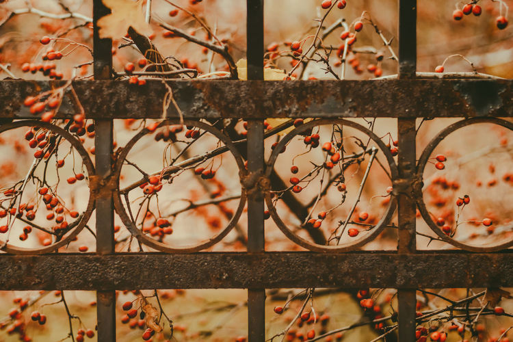 Autumn Barbed Wire Close-up Day Metal Nature No People Outdoors Protection Rusty