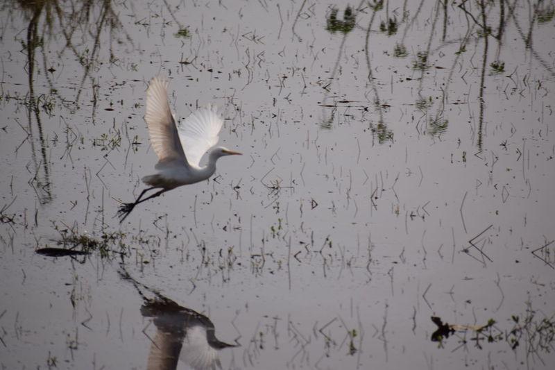 Birds Fliying Birds Freedom Lack Water Alone