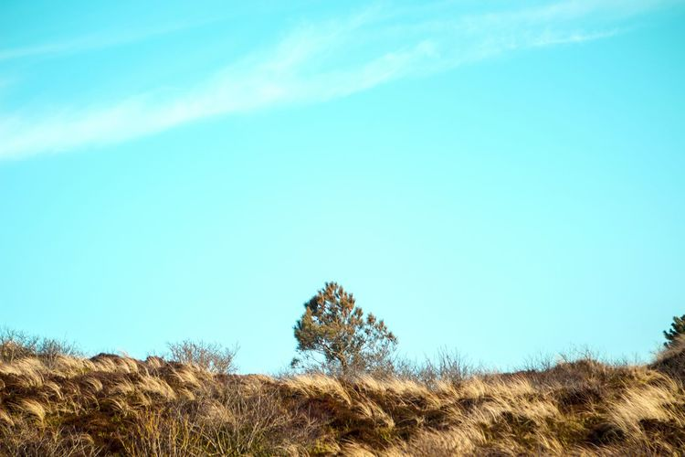 Lonely Lone Tree Minimalism Blue Sky Lessismore Tree