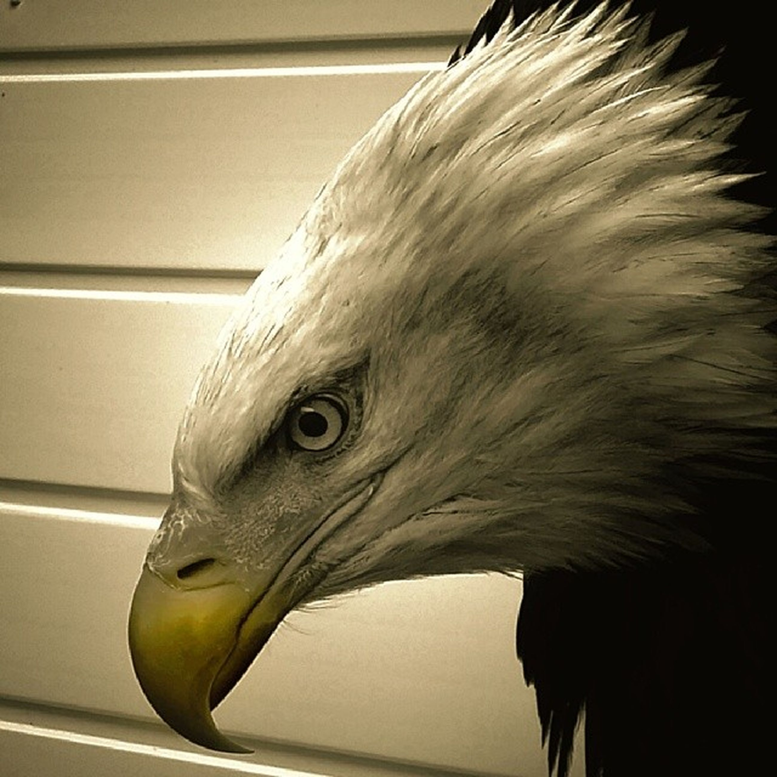 one animal, animal themes, animal head, close-up, bird, animal body part, wildlife, animal eye, side view, beak, animals in the wild, indoors, focus on foreground, part of, looking away, front view, looking, horse, portrait, profile