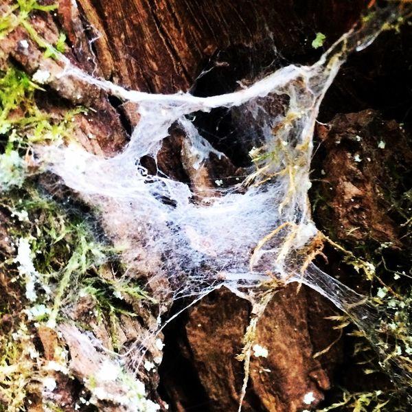 Spiderweb Web Spider Trees Spinnennetz Spinne Netz Workingclasshero Ithinkispider:D