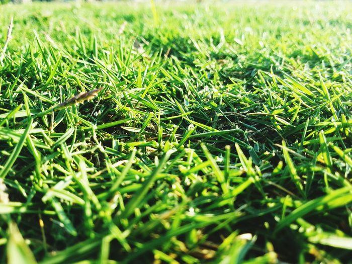 Green, green grass Photography Allemir