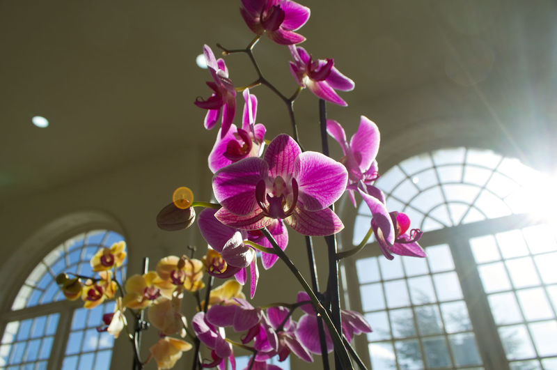 Kew Gardens Kew Gardens Nikon Orchid Beauty In Nature Ceiling Close-up Day Flower Flower Head Flowering Plant Focus On Foreground Fragility Freshness Growth Low Angle View Nature No People Orchid Outdoors Petal Pink Color Plant Purple Springtime Vulnerability