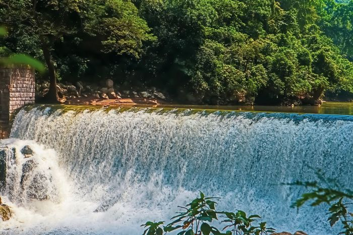Falls Plant Tree Water Nature Growth No People Day Beauty In Nature Tranquility Scenics - Nature Outdoors Tranquil Scene