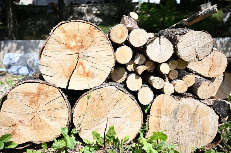 Timber Log Wood
